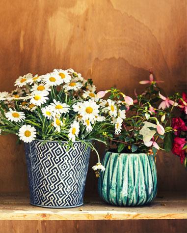 vieux pots de fleurs